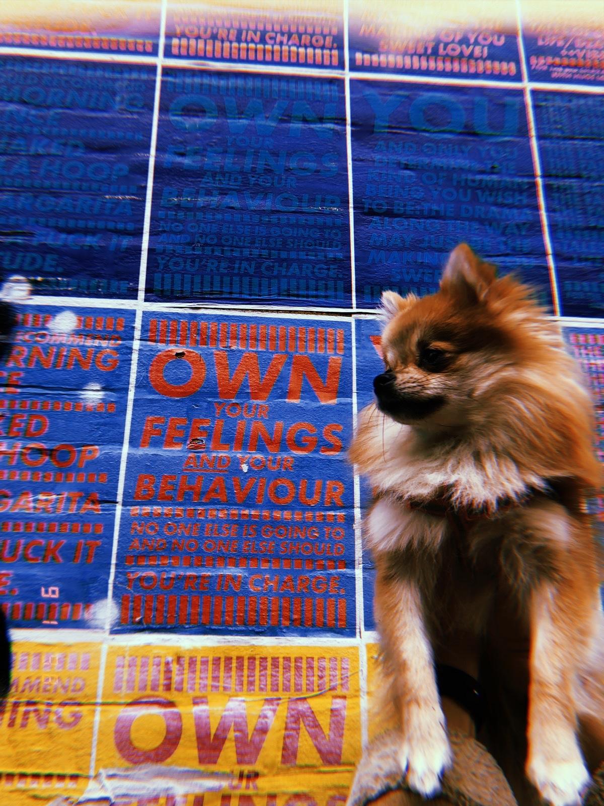 Pomeranian puppy peckham levels