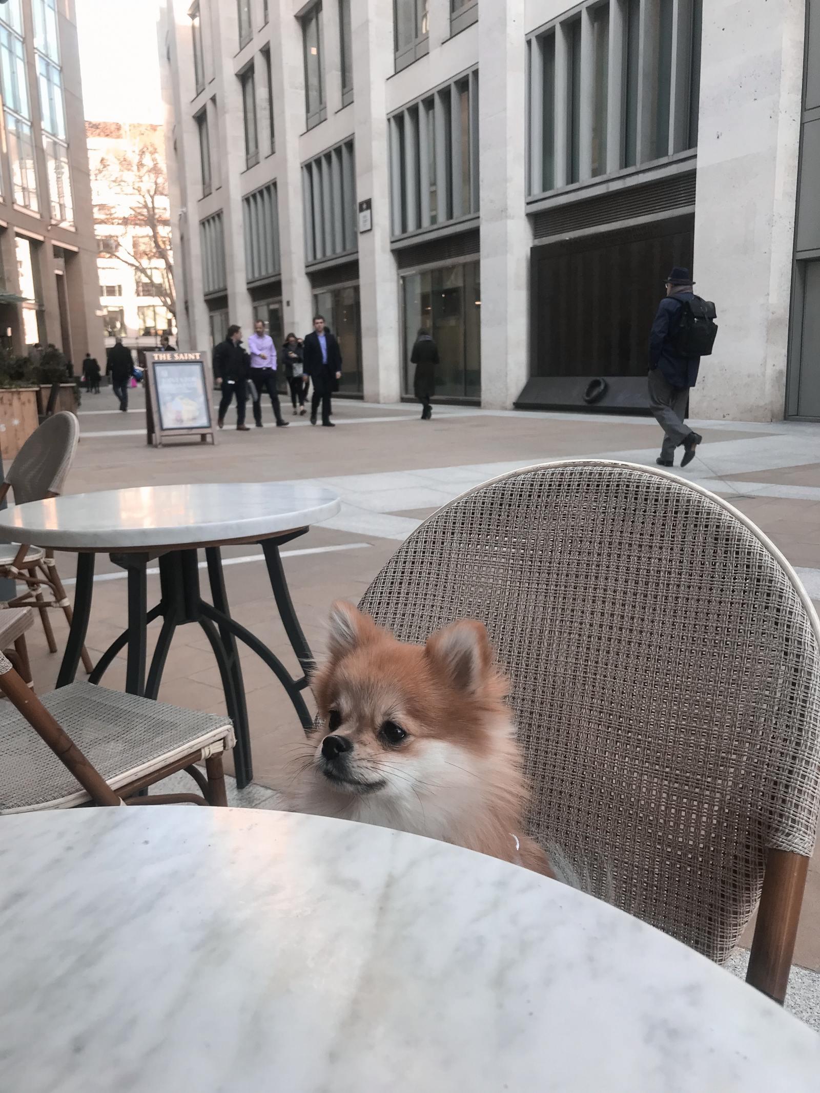 Pomeranian London