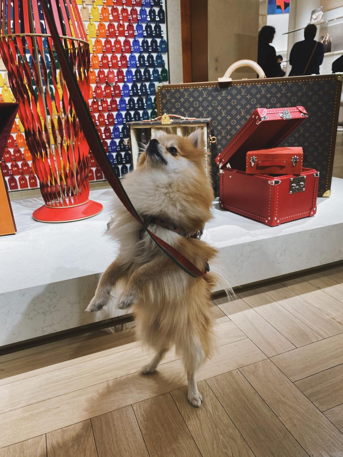 Dog friendly Louis Vuitton